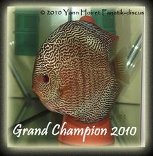 Grand champion snake skin discus ricky lim Duisburg 2010 slide