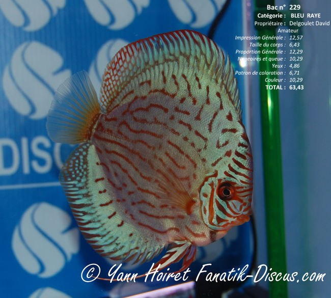 Discus turquoise David Delgoulet France Discus Show 2014