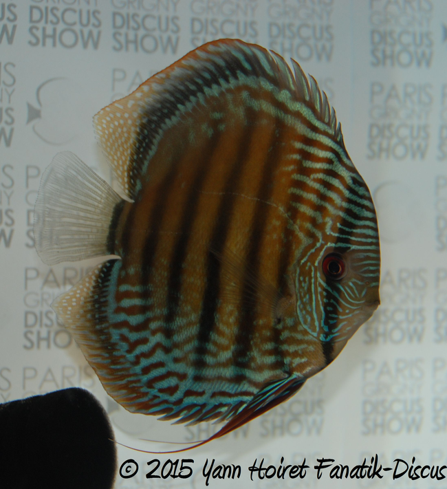 sauvage 2nd Paris Grigny discus show 2015