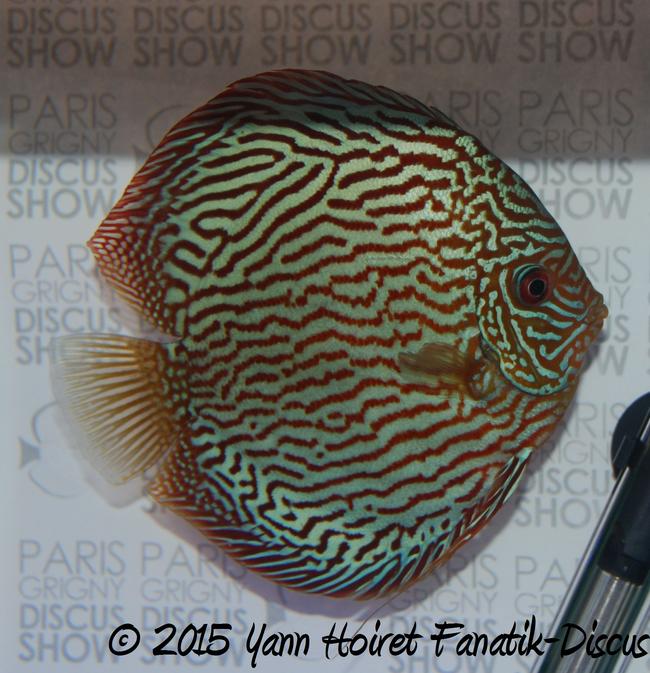 turquoise 1st Paris Grigny Discus show 2015