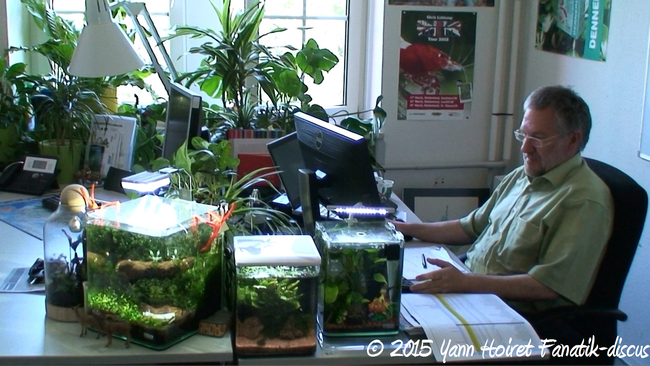 Plantes d'aquarium Dennerle dans les bureaux