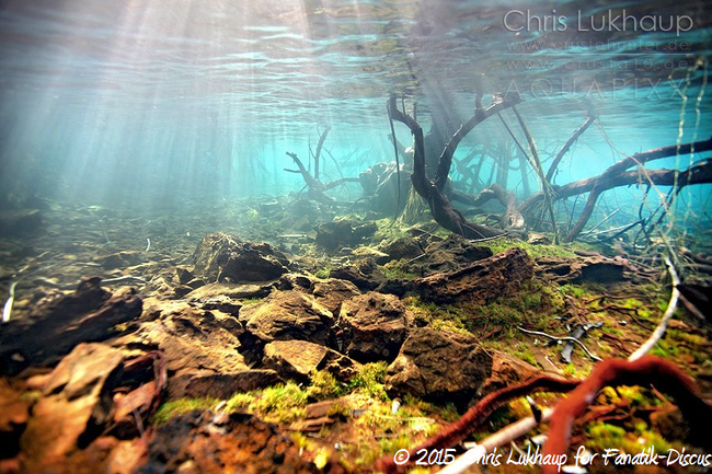 Sulawesi underwater Chris Lukhaup