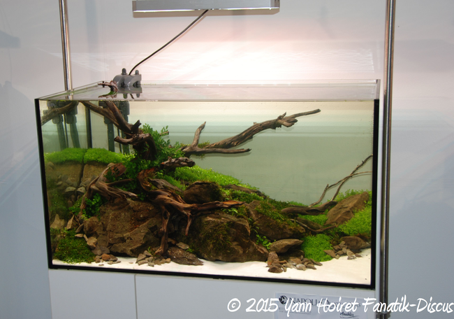 Aquascaping winner Napoli discus show 2015