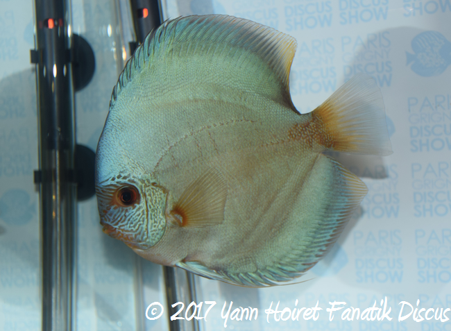3eme solid blue francis Hu Injazz discus