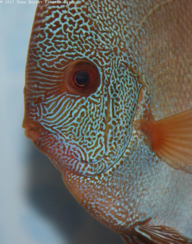 Face poisson premier Open Grigny 2017
