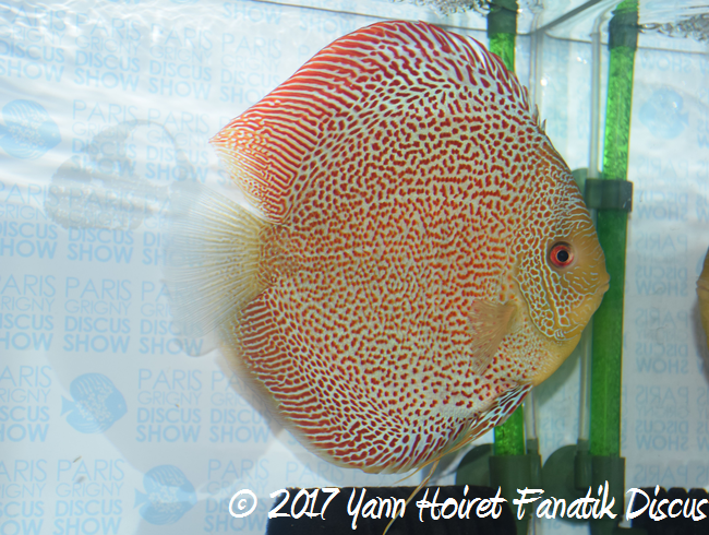 clive brampton 2nd Spotted discus