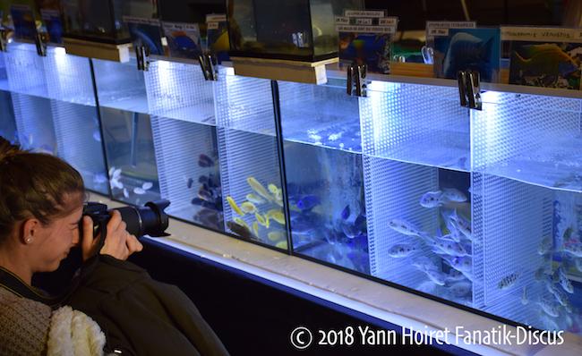 Photographe Bourse aux poissons Eybens 2018