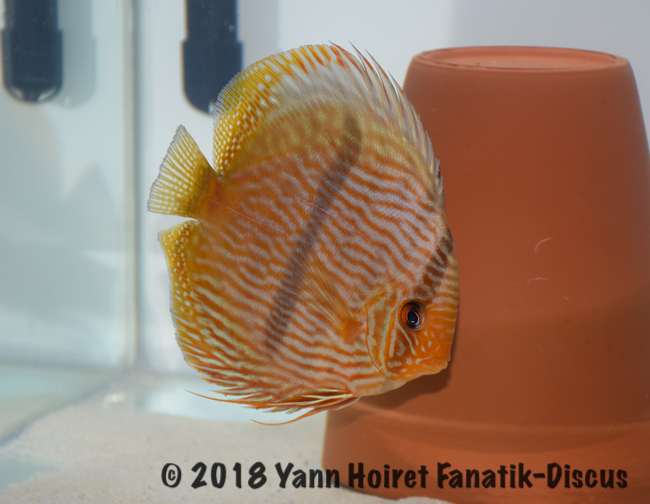 2nd Wild Heckel Nordic Discus Show 2018