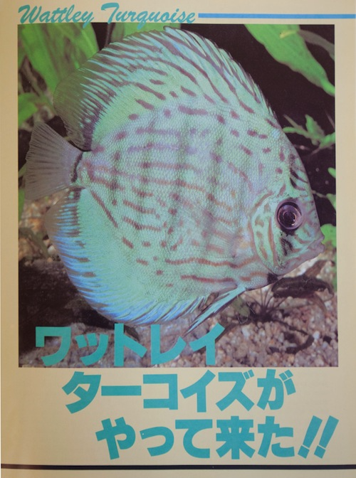 japanese magazine 2