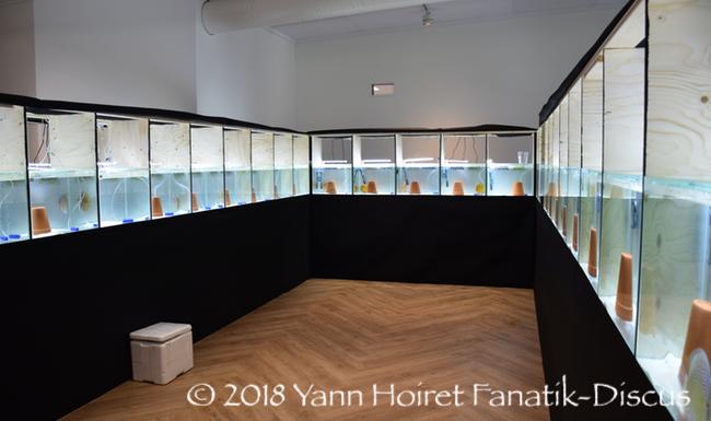 Installation du Nordic Discus Show 2018