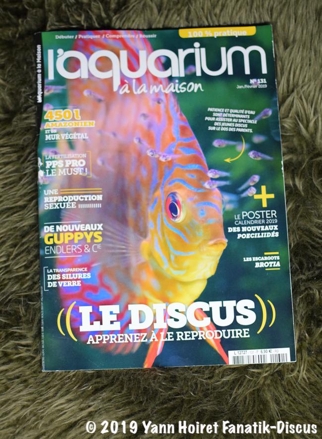 Home aquarium January February 2019