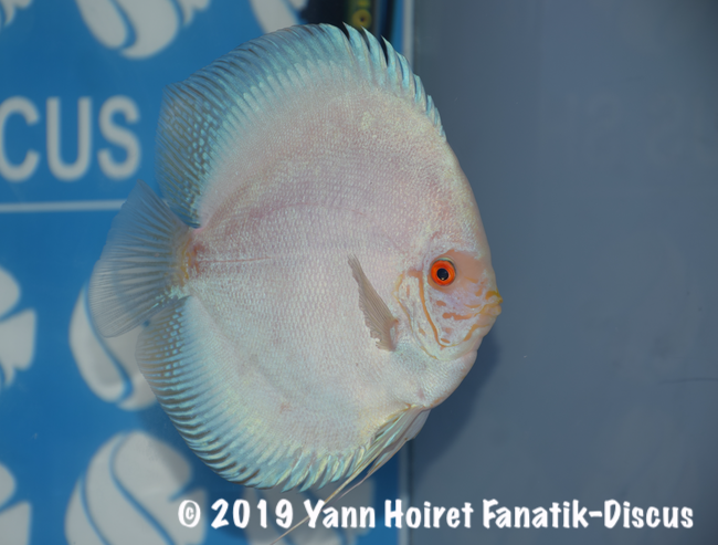 2nd Open Uni discus white butterfly FDS 2018